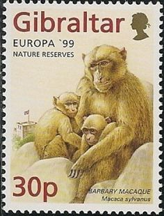 Barbary Macaque (Macaca sylva (Gibraltar) (Europa (C.) 1999 - Parks and Gardens-Upper Rock Nature) Mi:GI 853 Uk Stamps, British Overseas Territories, Postage Stamp Art, Going Postal, Vintage Stamps, Small Art, Nature Reserve, Stamp Collecting, Monkeys