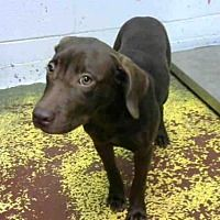 Adopt A Pet :: WAGS - Atlanta, GA