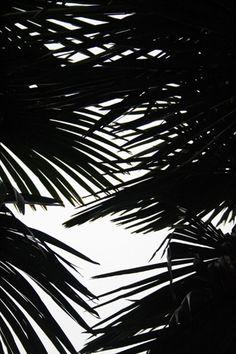 Palm crossover /patternity