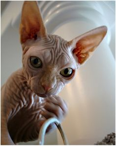 naked meow from space