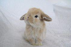 oh-so-#cute #bunny