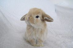 oh-so-#cute #bunny