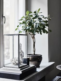 I'm curious - do you go through phases of loving certain countries? Right now I'm having a real Finland moment (piqued by my trip to Helsinki and the Tammisaari/Ekenäs Home Design, Window Sill Decor, Inside A House, Balcony Plants, Minimalist Room, Interior Decorating, Interior Design, Scandinavian Living, Decoration