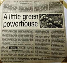 A Little Green Powerhouse. Article published in The Times of India Newspaper #Aamla Related: Aamla - Ayurveda Herb for Rejuvenation  Ayurveda believes that the fruit of Aamla helps to reduce all the three doshas or the body humors viz. Vata, Pitta and Kapha; which when aggravated above their normal limits cause a disease. http://drsonicakrishan.blogspot.in/2013/07/aamla-ayurveda-herb-for-healing-natural.html