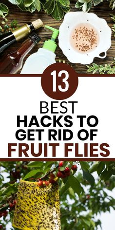 Household Bugs, Household Cleaning Tips, House Cleaning Tips, Diy Cleaning Products, Cleaning Hacks, Killing Ants, Homemade Fly Spray, Bug Spray Recipe, Diy Pest Control