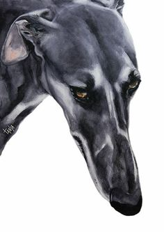 Greyhound Galgo Espanol painting by Tanja