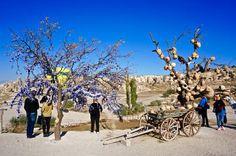 Evil eyes and pottery in trees, Cappadocia, Turkey