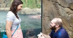 Fiona The Hippo Photobombs Couple's Engagement Pics, And Now They're So Much Better