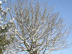 sneeuwboom Winter, Plants, Winter Time, Plant, Winter Fashion, Planets