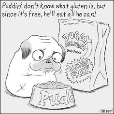 Puddin' don't know what gluten is, but since it's free, he'll eat all he can!
