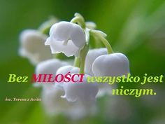 World Of Color, Polish, Colour, Love, Flowers, Color, Amor, Vitreous Enamel, Royal Icing Flowers