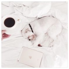 Bed all day. Puppy Love, Ipad, Sunday, Puppies, Dog, Coffee, Happy, Instagram Posts, Summer