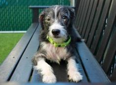 Dedicated to Saving NYC Shelter Animals. URGENT: Boots ID#1115982 is available for adoption at NYC ACC.