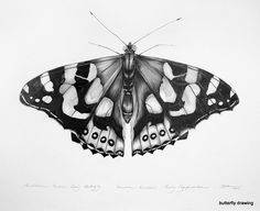 butterfly drawings tumblr - Google Search
