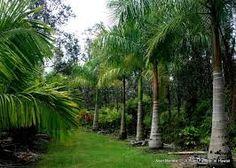 mettre quelques palmiers à l'avant des arbres déjà en place pour donner la note