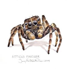 A Handmade Watercolor/Mixed Media Painting Pet Spider, Spider Art, Spider Drawing, Jumping Spider, Dark Art Drawings, Wildlife Paintings, Insect Art, Nature Story, Mixed Media Painting