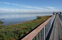 Baylands Preserve jogging trails