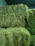 Hay storage basics - is your horse hay ready for winter??  proequinegrooms.com