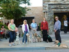 Guide dogs in training on an airport adventure