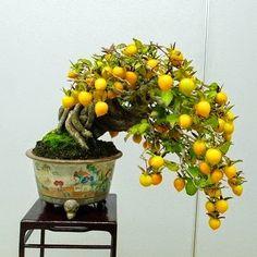 Nice! Photo by Bonsai Life in Japan. www.bonsaiempire.com #Bonsai