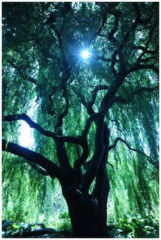 by *MoonRay1033 under a willow tree....nostalgia