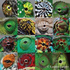 patchwork d'oeil de caméléons !
