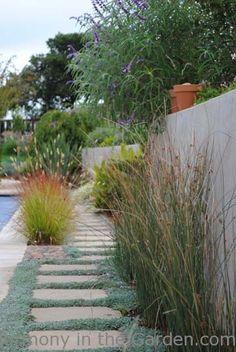 Juncus patens + dymondia margaretae = cool toned pathway