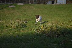 Gårdstunet Hundepensjonat: Flott dag og flotte hunder på tunet!
