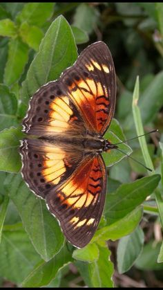 Flying Flowers, Butterflies Flying, Beautiful Butterflies, Butterfly Pictures, Nature Animals, Butterfly Wings, Nature Scenes, Science And Nature, Mother Nature