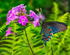 One of the prettiest butterfly photos I've seen this year, by Gwen Cross Photography Butterfly Photos, Butterfly Flowers, Spring Flowers, Butterflies, Long Winter, Spring Has Sprung, Moth, Insects, Exotic