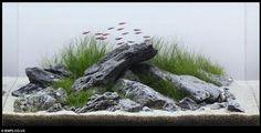 zen artwork | Zen and the art of fish tank maintenance: 'Aquascapers' herald the end ...