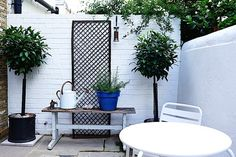 Two potted Bay Trees in garden of Isabel and George Blunden London renovation | Remodelista