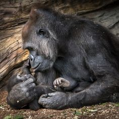 A Mother's Love Photo by Helene Hoffman