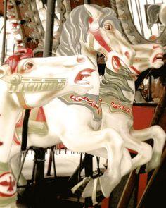 Carousel horses - amumsement park photo -merry go round