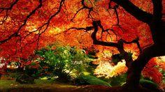 Elegant Autumn Wallpaper Widescreen