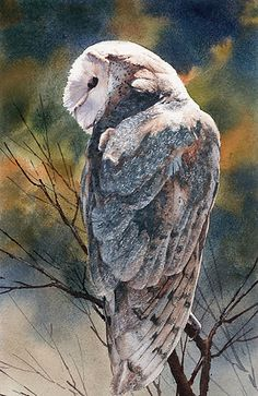 Barn Owl by Joe Garcia Watercolor ~ 15 x 7