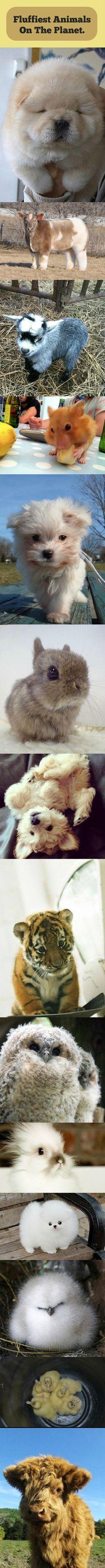 Fluffy Cute Animals | Mega Memes LOL!