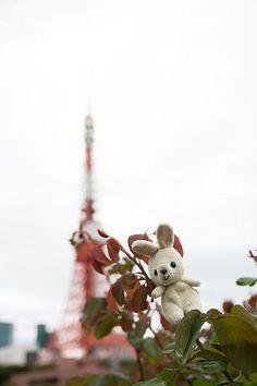 Rabbit and Tokyo Tower うさぎと東京タワー rabbit うさぎ 東京タワー tokyotower 東京 タワー tokyo tower landscape 100tokyo cooljapan