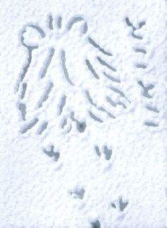 Twitter / otoufu_hamster: とことこ… #SnowCanvas ...