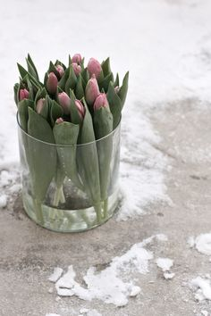 Lovely Warm Pink Tulips