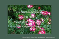 vriendschap en bloemen - Google zoeken