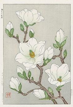 torii gallery: Magnolia by Kawarazaki Shodo: - Beste Art Pins Art And Illustration, Illustrations, Botanical Drawings, Botanical Prints, Art Floral, Art Chinois, Illustration Botanique, Art Japonais, Japanese Flowers