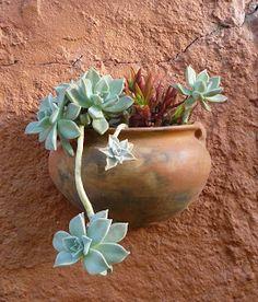 Jardines de cactus y suculentas: Macetas en la pared