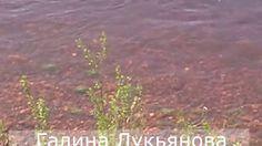 Красивая чистая вода.  Можно камушки пересчитать.