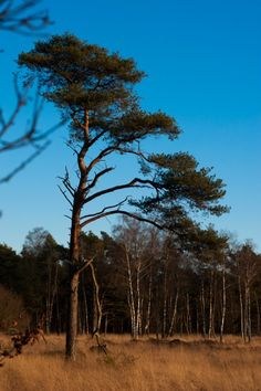 Photo Nature, Forest Country Roads, Plants, Photography, Photograph, Fotografie, Photo Shoot, Planters, Fotografia, Plant