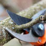 Kedy strihať ovocné stromy, stromčeky a kríky