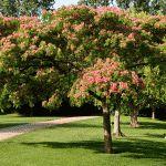 Quelle meilleure sensation que de se reposer à l'ombre d'un arbre? Cette solution esthétique et parfumée joint l'utile à l'agréable.