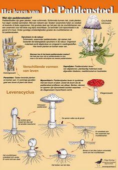 Alles over paddenstoelen