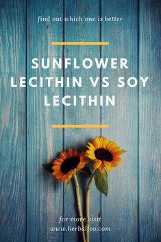 Sunflower Lecithin vs Soy Lecithin: Find Out Which Is Better Sunflower Lecithin Benefits, Healthy Diet Recipes, Healthy Food, How To Become Healthy, Plant Tissue, Soy Lecithin, Tea Benefits, Greek Words, Natural Healing