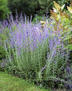 10 plantes faciles qui résistent au manque d'eau